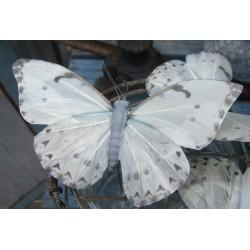 Vacker fjäril i grå-vitt och ljusblått