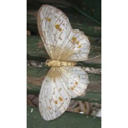 Vacker fjäril i naturfärger