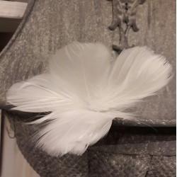 Fjäderblommor vita i förpackning