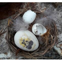 Sött fågelbo med vackert ägg