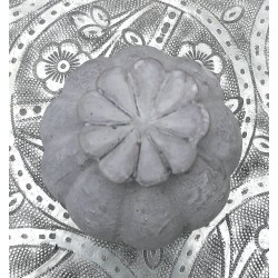 Vallmofrökapsel i grå fiberbetong