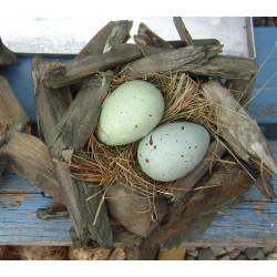 Fågelbo med blå-gröna ägg